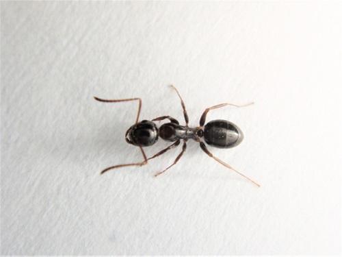 羽 蟻 部屋