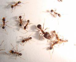 蟻 飼育 ケース