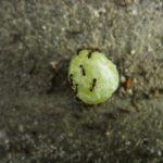 蟻が餌を食べないで貯蔵するのは何故?