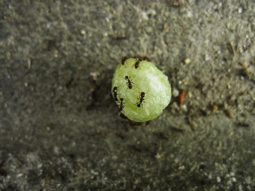 蟻 餌 貯蔵