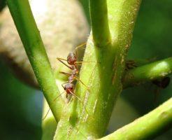 蟻 対策 畑