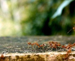 蟻 茶色い室内