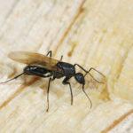 羽アリが家の中に発生する原因や一匹見つけた場合は!?