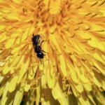 蟻を家に寄せ付けない為の対策方法とは!?