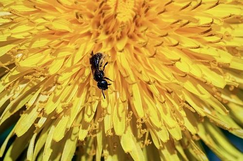 蟻 寄せ付けない 方法