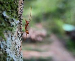 蟻 刺す 症状 かゆみ