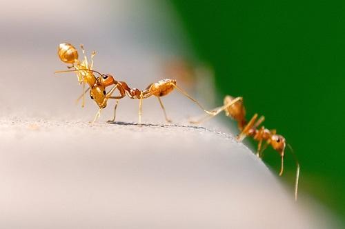蟻 駆除 重曹 酢