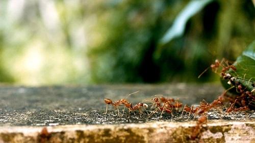 羽アリ 巣 駆除