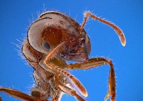 蟻 危険 日本