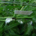 蟻の駆除にアロマやチョークが効く!?方法や効果について