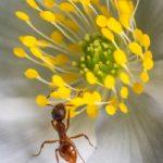 アリの捕獲方法!罠の作り方について