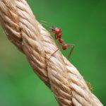 室内や畳に茶色の蟻が!原因や対策方法とは?