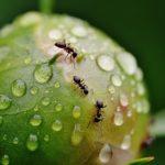 蟻と蜂の違いや共通点について