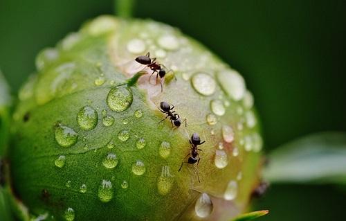 蟻 蜂 違い 共通点