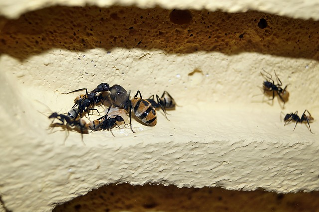 蟻 卵 孵化 日数