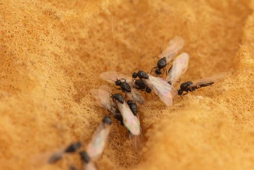 羽アリ 蛍光灯 虫