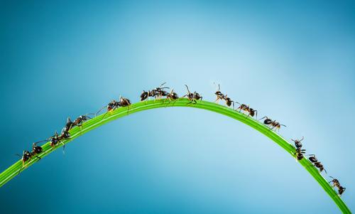 蟻 活動 時期 気温