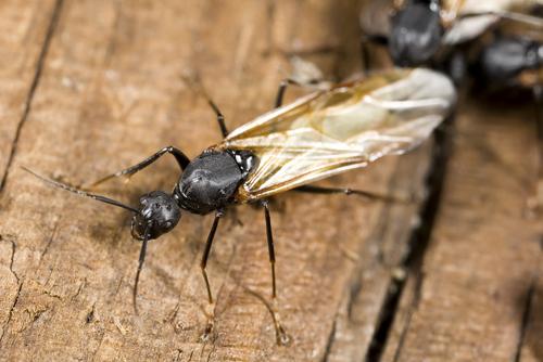 羽アリ 種類 大きさ