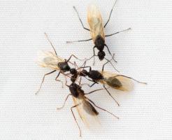 羽アリ 大量発生 ベランダ