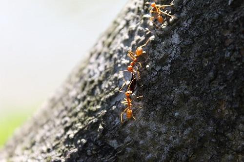 蟻 人間 比較
