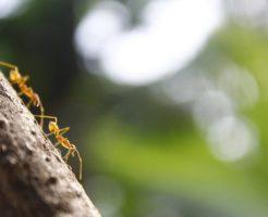 蟻 発生 時期 対処