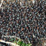 全世界の蟻の種類について。何種類いるの!?