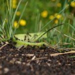 こんなにもいた!アリの日本の種類のまとめ