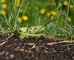 アリ 種類 日本