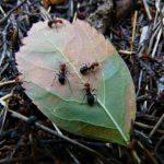 蟻が集まる理由って一体何!?