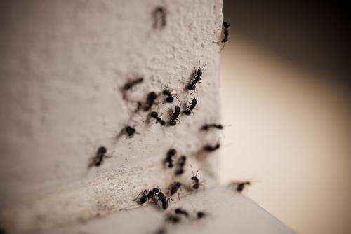 蟻 車 原因 駆除