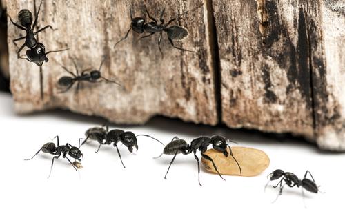 アリ 害虫 益虫