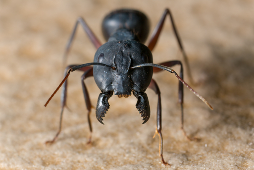 蟻 冬眠 時期
