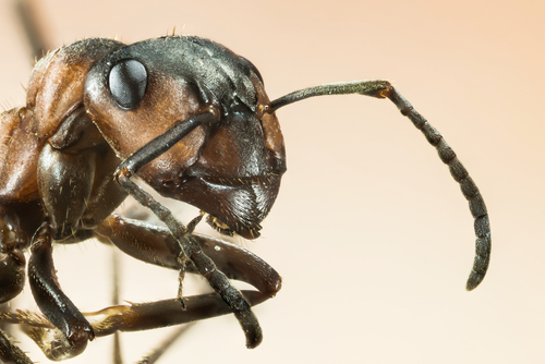 蟻 食べる 動物