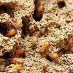シロアリと羽アリとアリの違いについて
