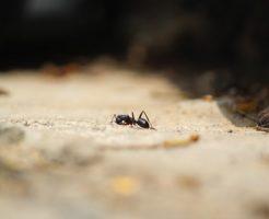 蟻 刺され アレルギー