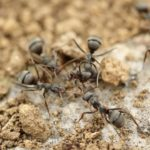 蟻の飼育、越冬の仕方について