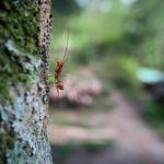 蟻に刺された時のかゆみ等の症状や対処法について