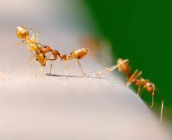 蟻 卵 場所 移動