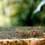 羽アリの巣の駆除方法について