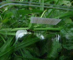 蟻 駆除 アロマ チョーク