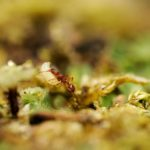 蟻の卵の大きさや1日に産む数ってどれくらい!?