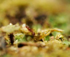 蟻 卵 大きさ 数
