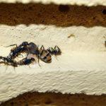 蟻の卵の孵化の方法やかかる日数はどれくらい!?