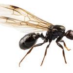 羽アリが網戸の隙間から侵入するのを防ぐ方法とは