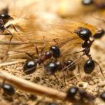 アリの孵化の時期や孵化までの日数とは!?