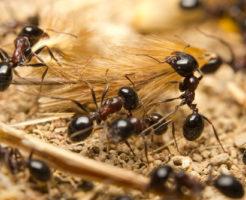 蟻 羽化 時期