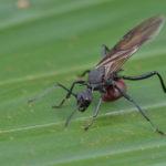 お風呂場に羽アリが大量発生する原因や対策方法とは?