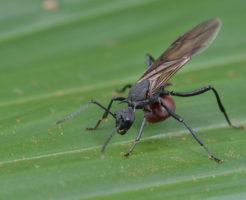 羽アリ 大量発生 風呂場