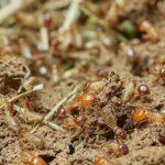 自分でできる羽アリの駆除の方法について
