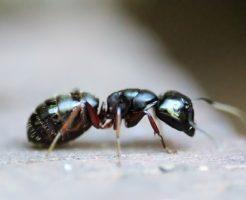 蟻 駆除 方法 室内